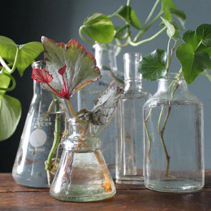 Разведите всего лишь одну таблетку вечером и цветы будут радовать вас весь год