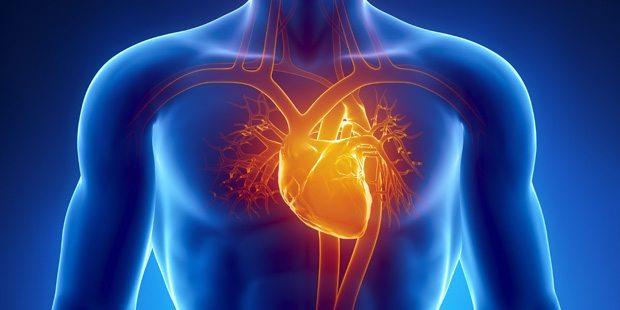 Как правильно тренироваться людям с сердечно-сосудистыми заболеваниями