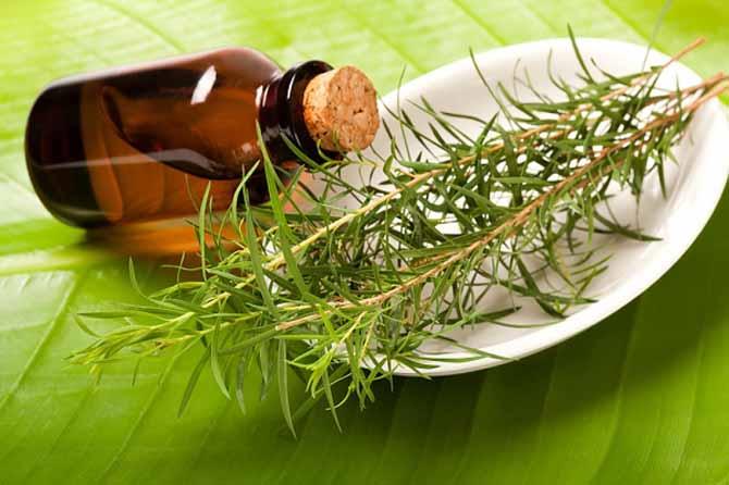 Используя масло чайного дерева вы забудете о проблемах кожи