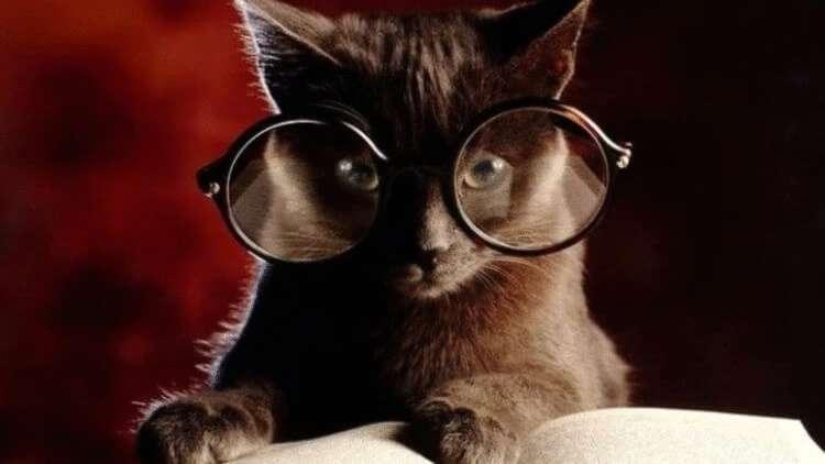 20 фактов о кошачьих, которые вы 100% не знали