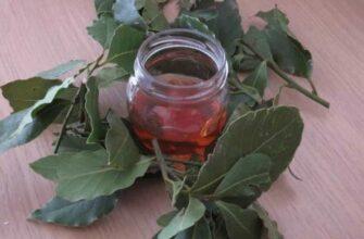 Отвар из лаврового листа и мёда избавил от боли в суставах