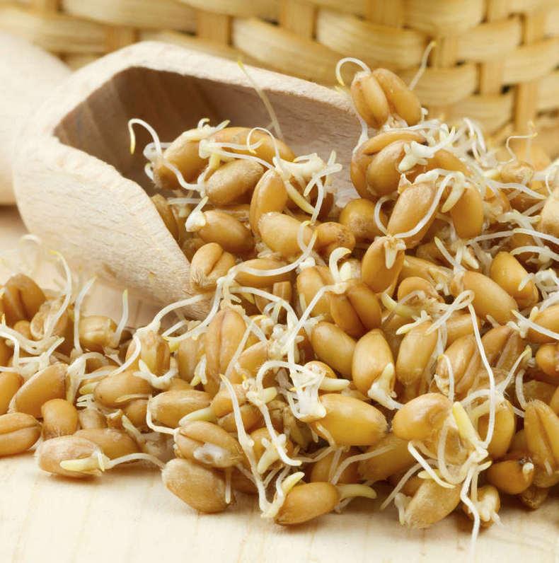 Самый опасный лектин в пшенице. Это не глютен!